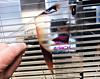Static Window Cling | UV Gel | Window Film